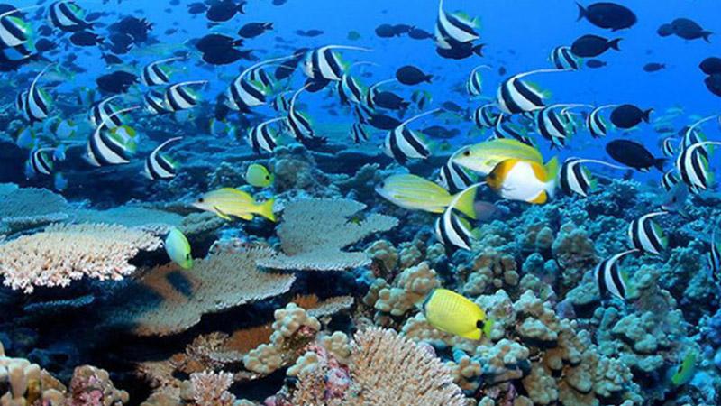 【会员半价】亚龙湾海底世界