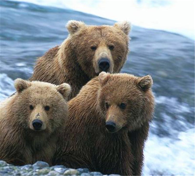 【会员免费】泉州海丝野生动物世界