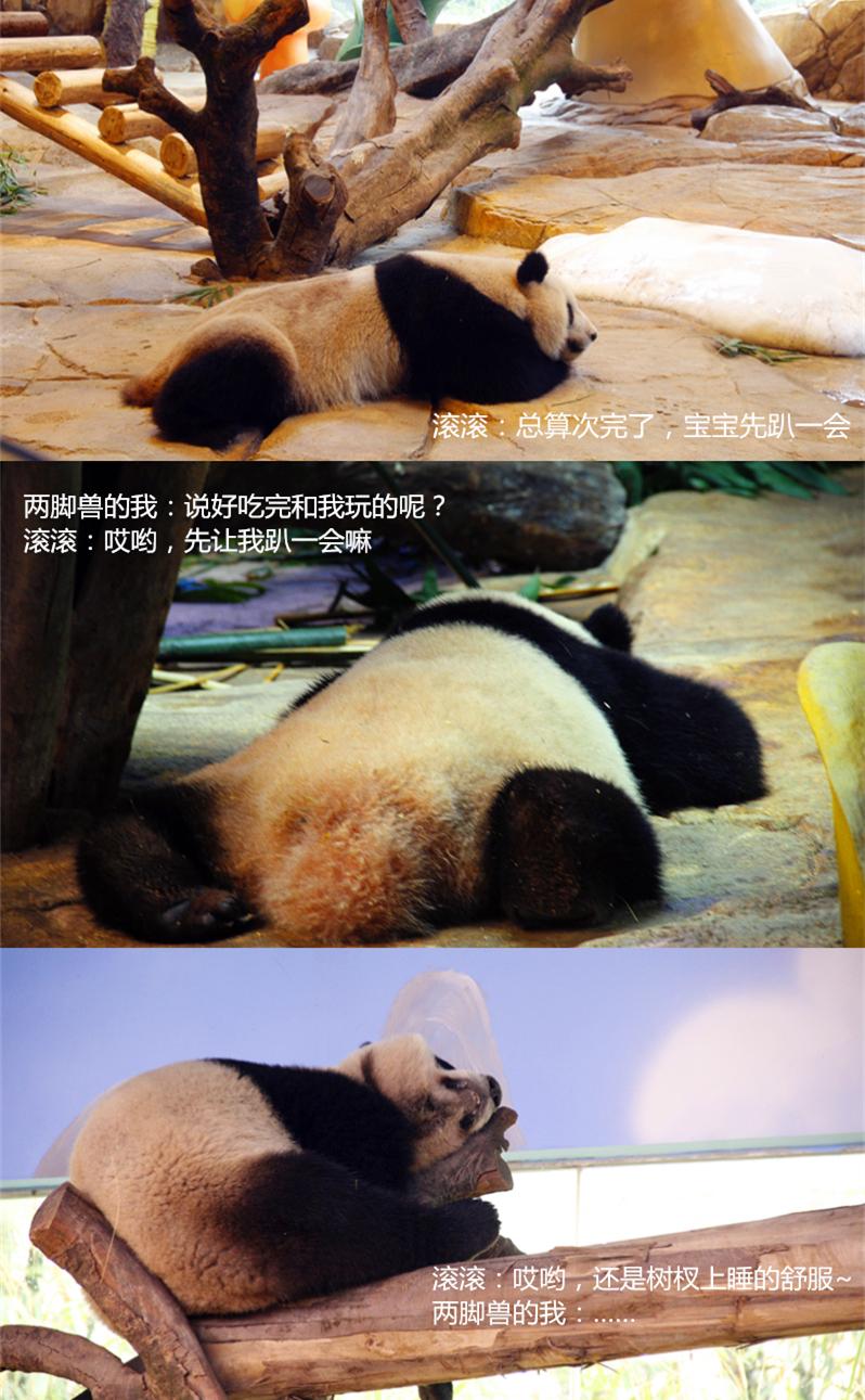 【会员半价】长隆野生动物世界(特定日票)