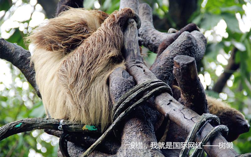 风里雨里,长隆野生动物园的萌兽们在这里等您